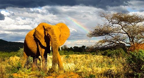 elephant-douglas-p-whitney-dpc