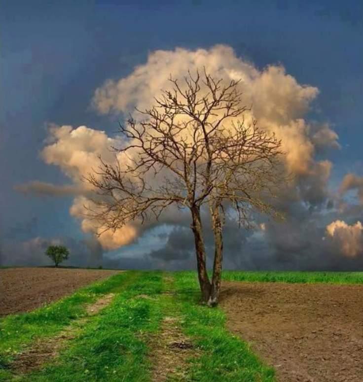 cloud-tree