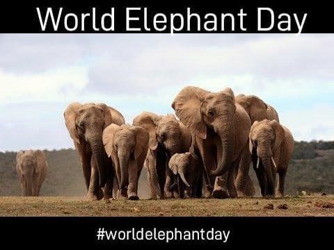 world-elephant-day-2018