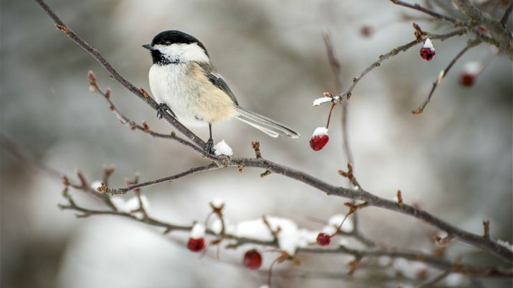 bird-branches-2